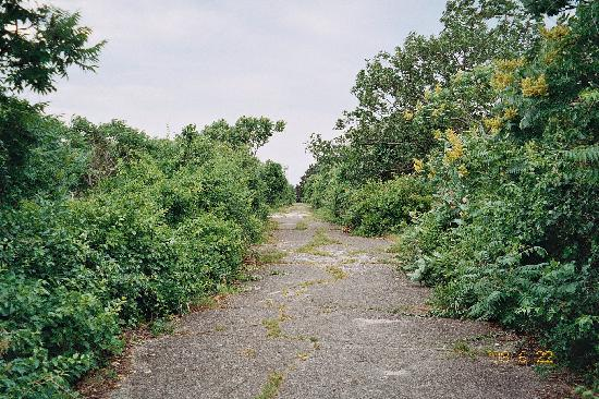 Bumpkin Island: The main trail that traversed the length of the island