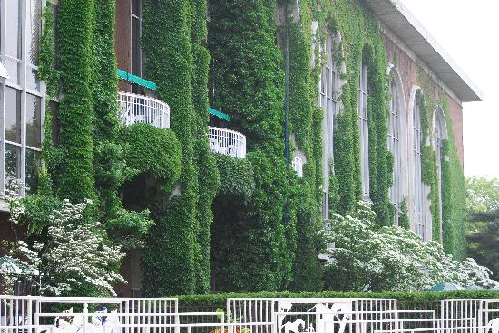 Ivy covered clubhouse at Belmont Park
