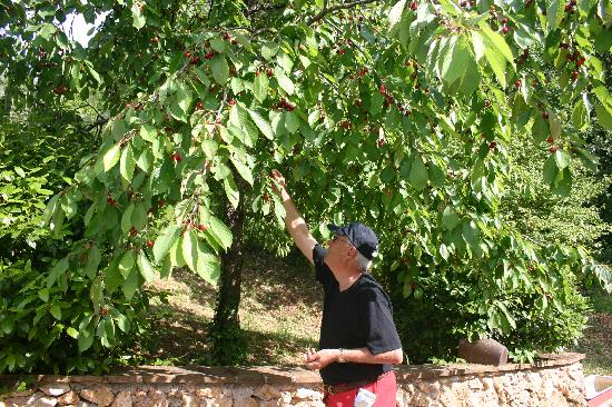 Albergo Ristorante La Macchia: Picking cherries off the tree by the pool