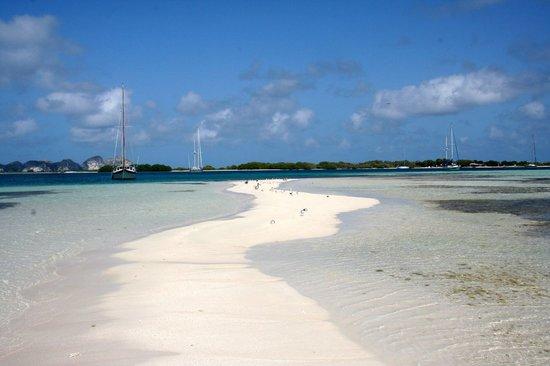 Isla El Gran Roque, Venezuela: Francisquì