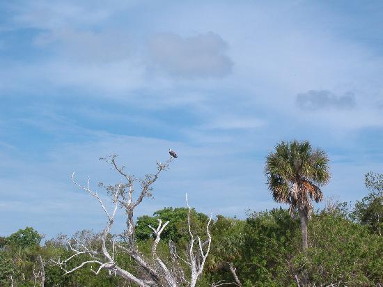 Goodland, FL: Gullivan Bay