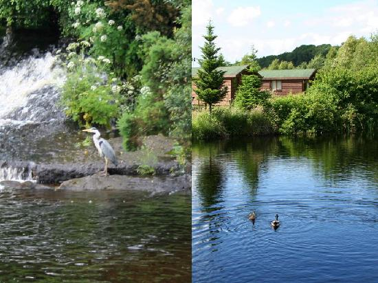 Rathdrum, Ireland: Heron on the river and Cabin by the lake