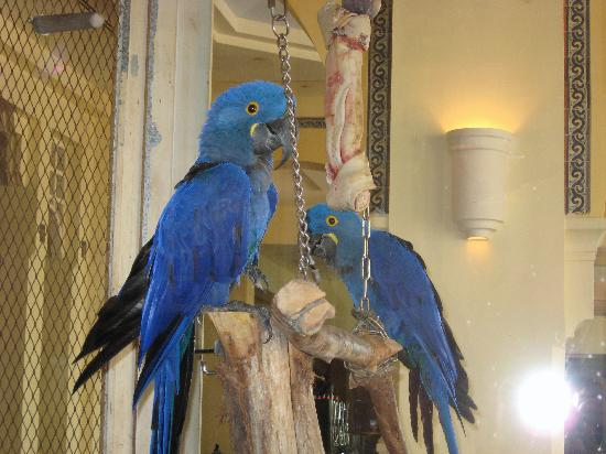Las Casitas Village, A Waldorf Astoria Resort: Parrots in the El Conquistador Lobby