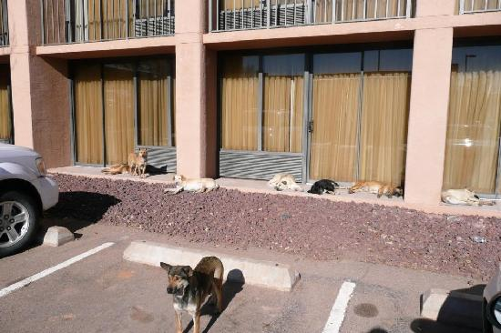 Holiday Inn Canyon de Chelly: There are a lot of stray dogs