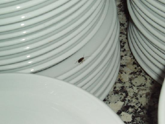 SBH Monica Beach : cockroaches on clean plates in resturant