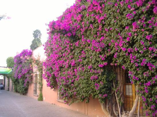 Hotel Casablanca: Every street covered with bouganvillea