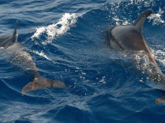 Iberostar Las Dalias: les dauphins(croisière à bord du Freebird 1 )