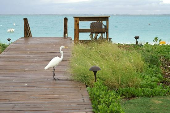 Providenciales: a kind of Flamingo, but small