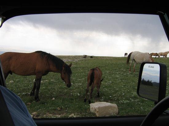 Montana: Wild Horse Range (2) 7-2005