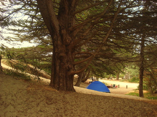 Bodega Dunes Campground: our site overlooking the neighbor's site