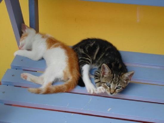 The two cuddly kittens...