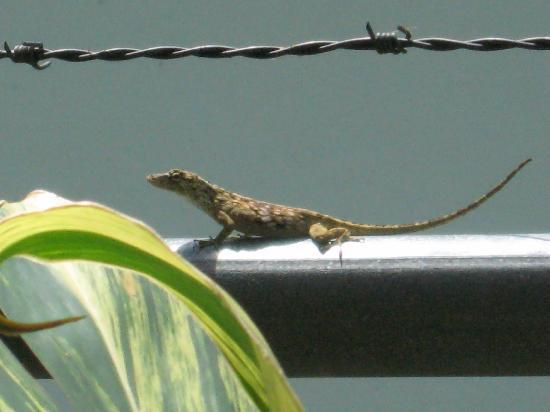 Anton Valley Hotel - Gecko