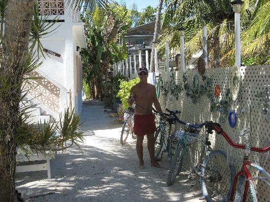 Tree Tops Guesthouse: Cour intérieur et location de byciclettes