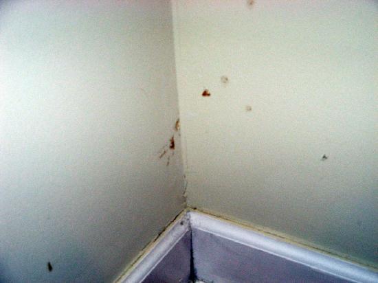 Pratt Shore: Wall stains