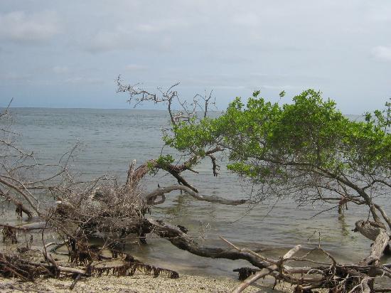 Isla Palma, Κολομβία: La playa...