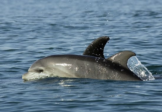 Wildlife Connection: Baby Dolphin - June 2008