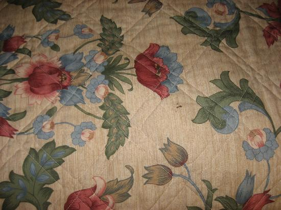Dutch Treat Motel: Stain on Bed spread