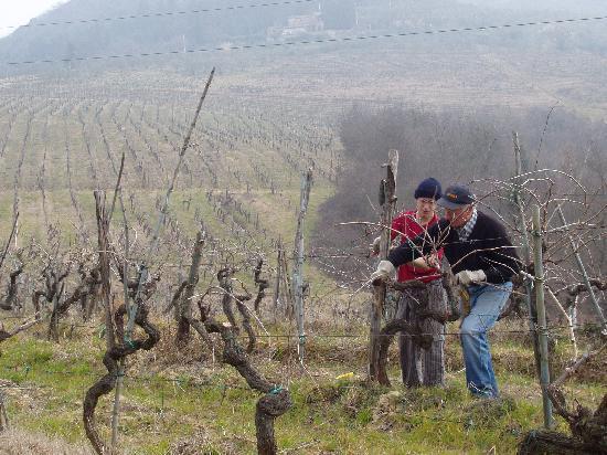 La Volpaia: A vineyard across the street.