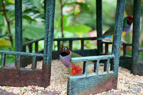 The Original Mackinac Island Butterfly House & Insect World: Birds in the bird feeder