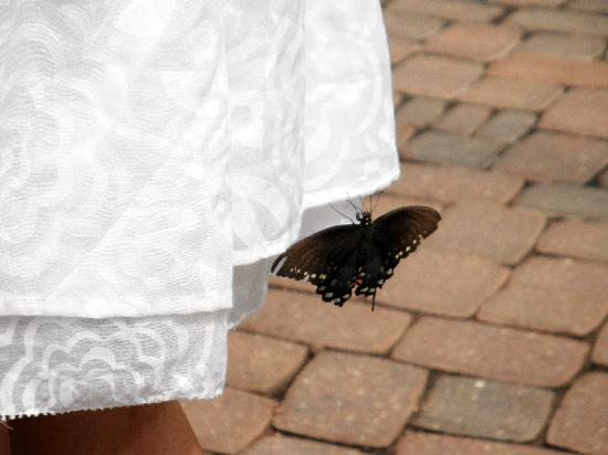 The Original Mackinac Island Butterfly House & Insect World: A butterfly on my skirt