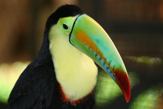 Alma del Pacifico Beach Hotel & Spa: toucan