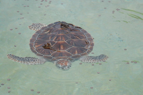 small turtles - Picture of Cayman Turtle Farm: Island Wildlife ...