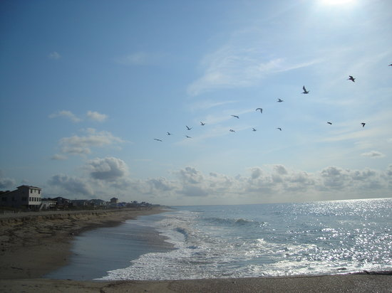 Edisto Beach, SC: Birds/beach