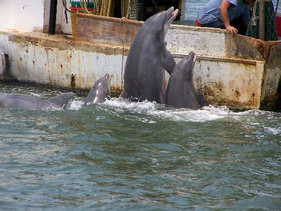Beachside Colony: dolphin tour