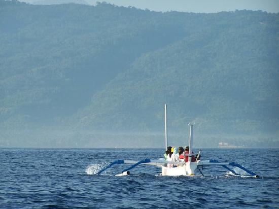 West Bali National Park, Indonesia: Dolphin Watching at Menjangan Strait