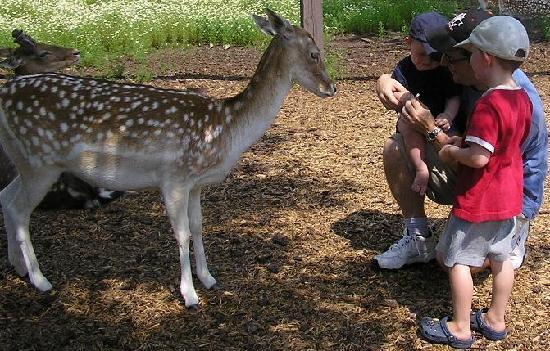 Moncton, Kanada: Feeding the deer!