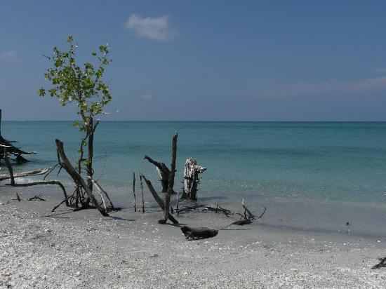 Southwest Gulf Coast, FL: Stump Pass Beach