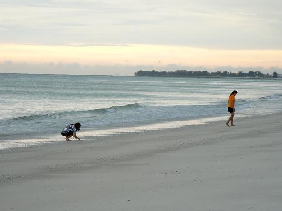 Gulf View Condominium : Hunting for shells on beautiful beach right in front of condo.
