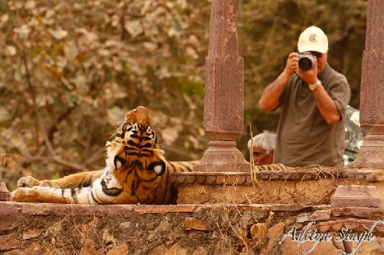 Sawai Madhopur, India: Tiger photographers