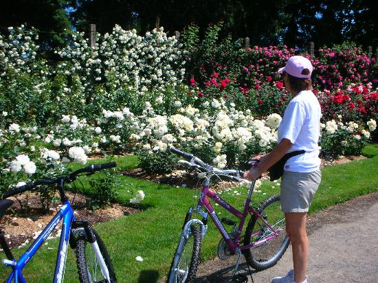 River Walk Inn Bed and Breakfast: Bikes at the Rose Garden