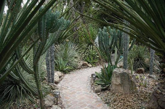 Antigua Villa Santa Monica : cactus garden at rear of property