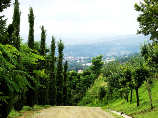 Reggello, İtalya: The driveway for the Agriturismo