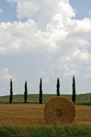 Massa Marittima, Italy: Landschaft bei Massa Maritima