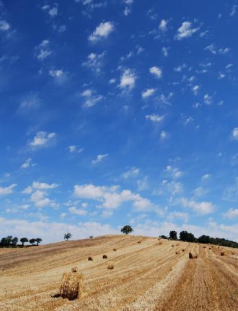มัสซามาริตตินา, อิตาลี: Landschaft bei Massa Maritima