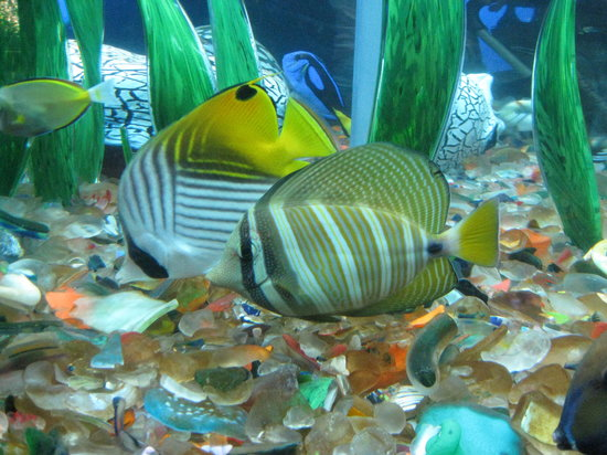 Oregon Coast Aquarium Newport Top Tips Before You Go