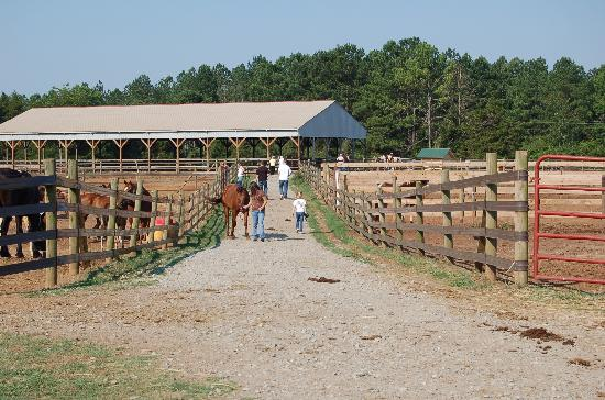 Southern Cross Ranch: Corral area behind the barn....go fetch your horse!