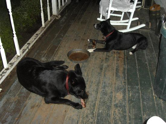 Tierra Linda Bed and Breakfast: Rufus and Lexi enjoying their daily BBQ