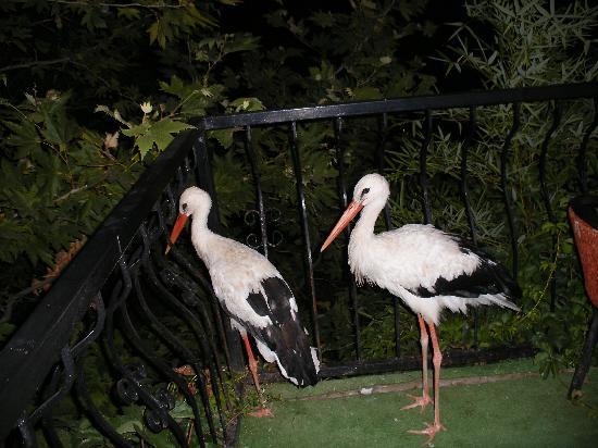 Mehtap Hotel Dalyan: Storkes at Ley Ley