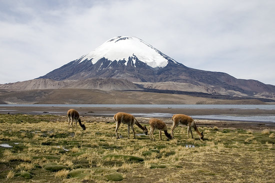 Arica, Chile: Parinacota | Lauca National Park | C