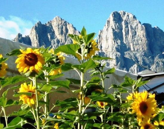 Alleghe, Italie : girasoli