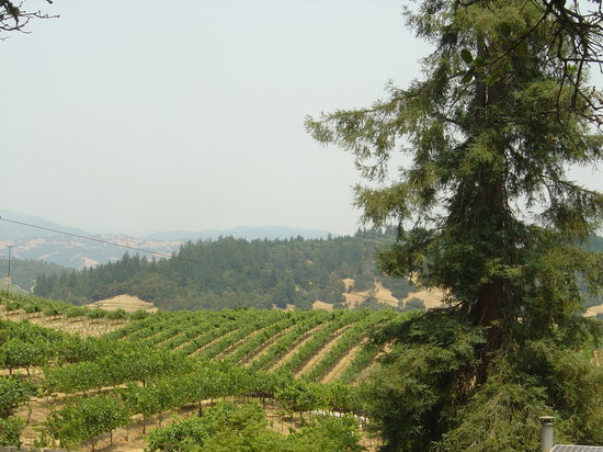 Santa Rosa, Californie : Raymond Burr winery