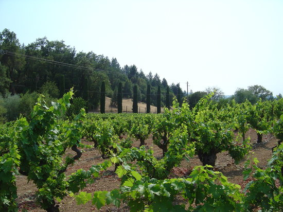 Санта-Роза, Калифорния: Pendroncelli winery