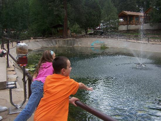 Rainbow Lake Cabin & RV & Resort : Feeding the fish!