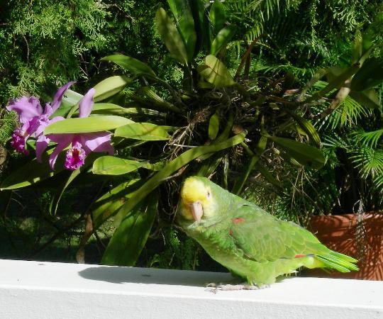 Villa Ensenada Inn: Parrot