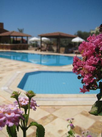 Hotel Asiyan: Pool gardens
