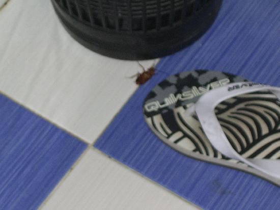 Residencia do Sul : Cucaracha muerta